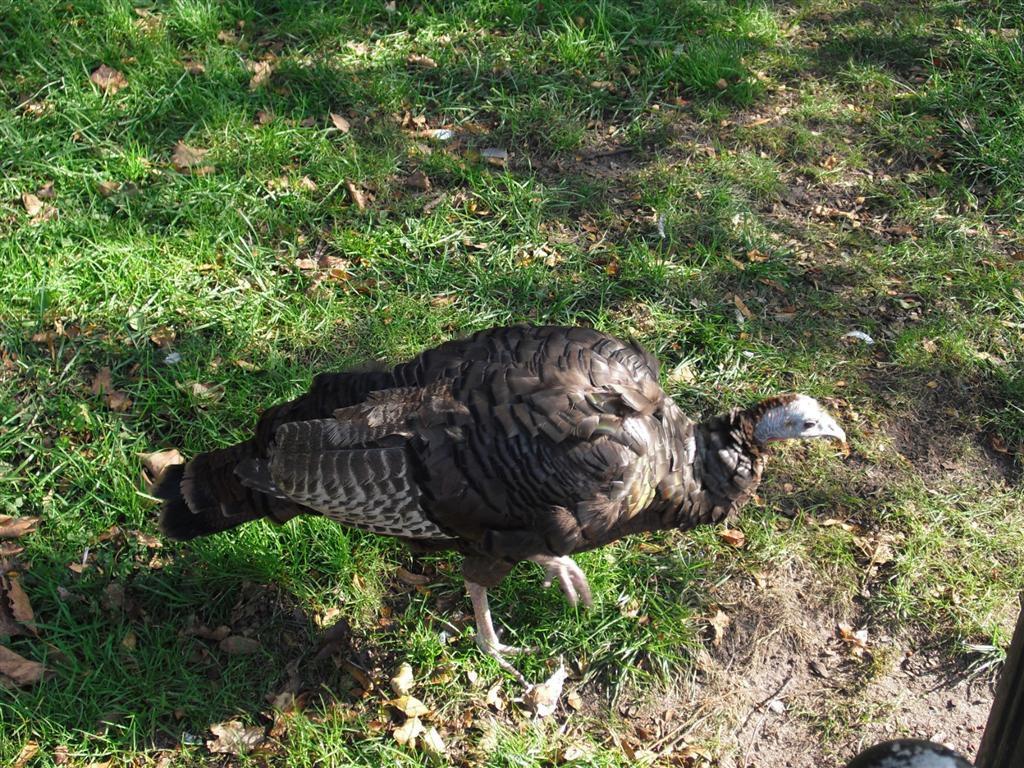 Turkey NYC