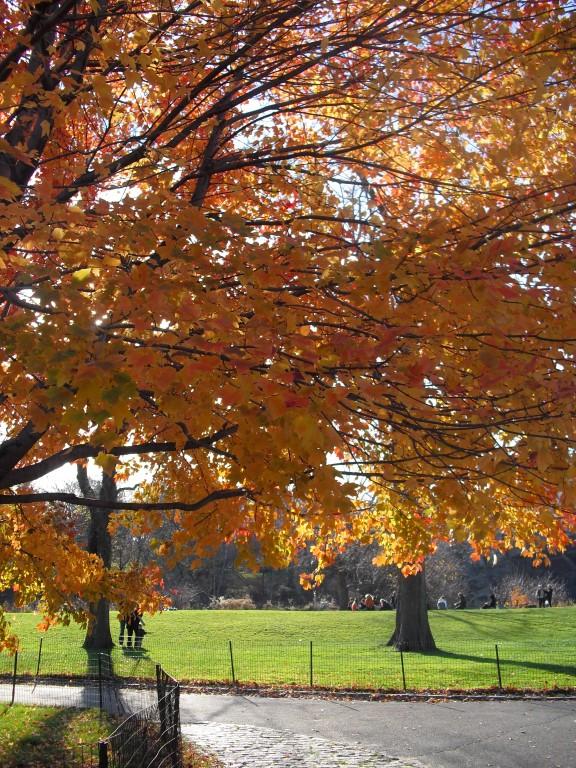 Herfstkleuren in Central Park