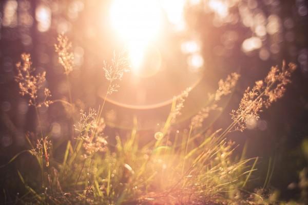 gras met licht