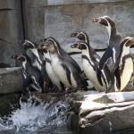 Tierparks Hagenbeck