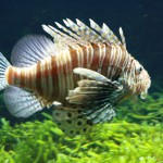 Grote vis Dierentuin Emmen