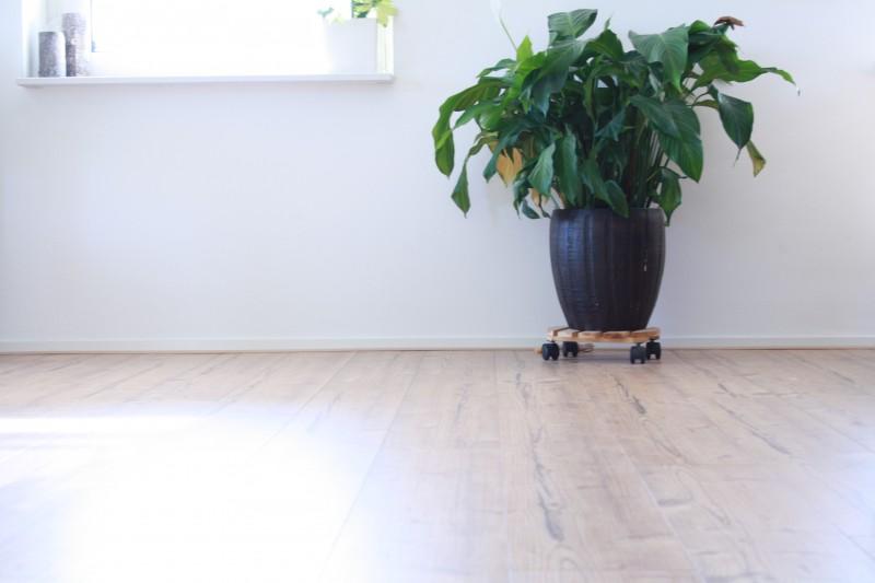 Muur vloer en plant