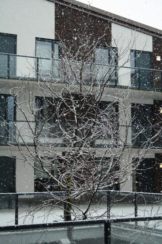 I Love Winter! Foto binnenplaats sneeuw