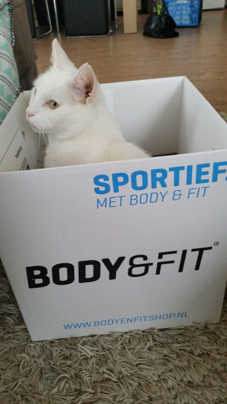 Dove kat Diablo in een doos van Body & Fit Shop