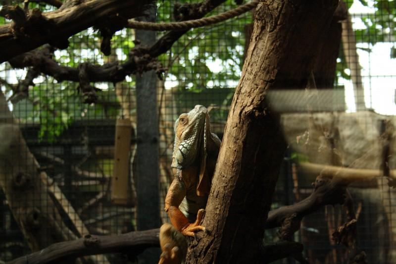 Reptiel Artis