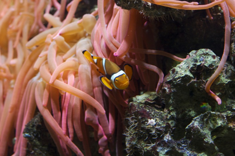 Nemo Artis