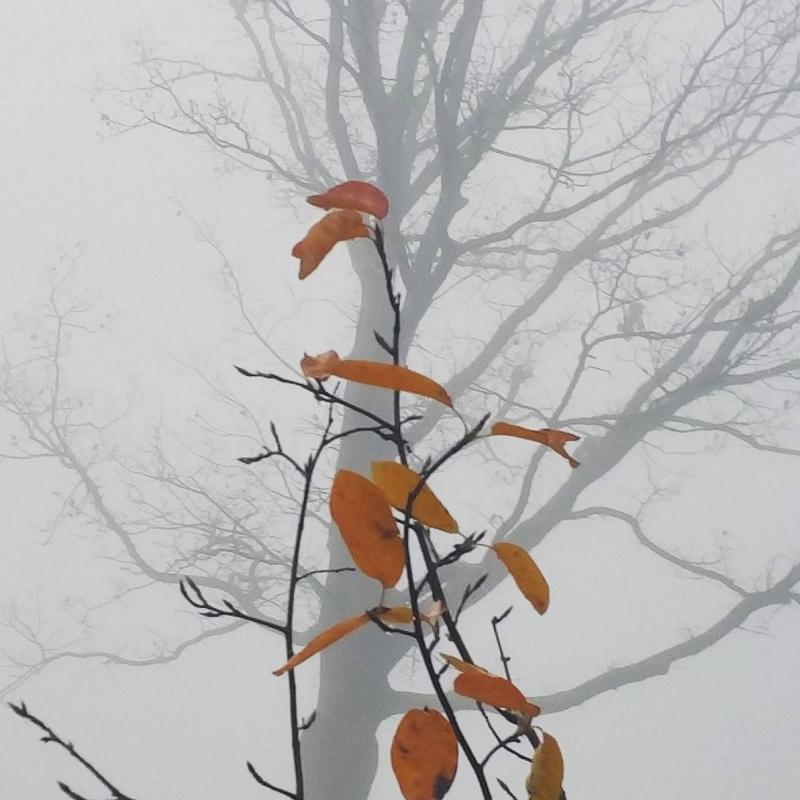 Daily Snaps #1 Fog