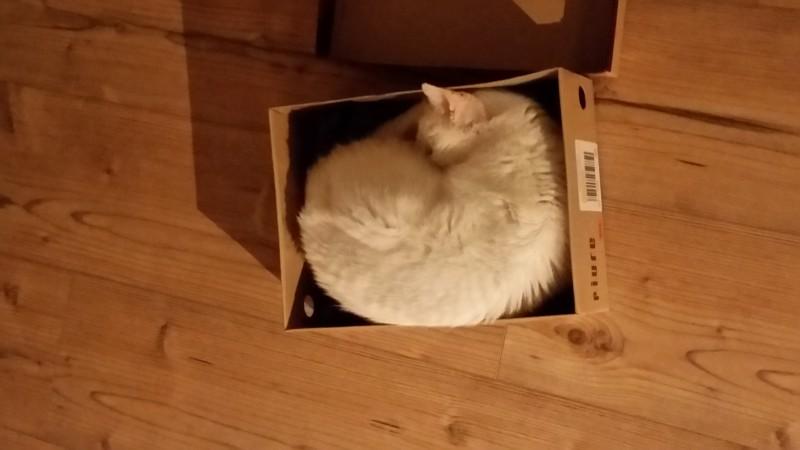 Daily Snaps #1 Diablo in a box