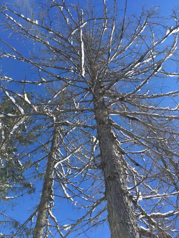 Bomen bij Nassfeld