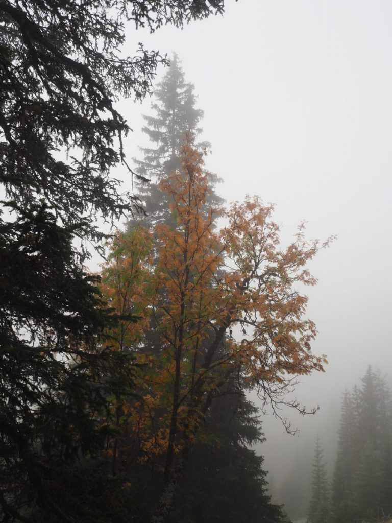 Herfstkleuren in Serfaus