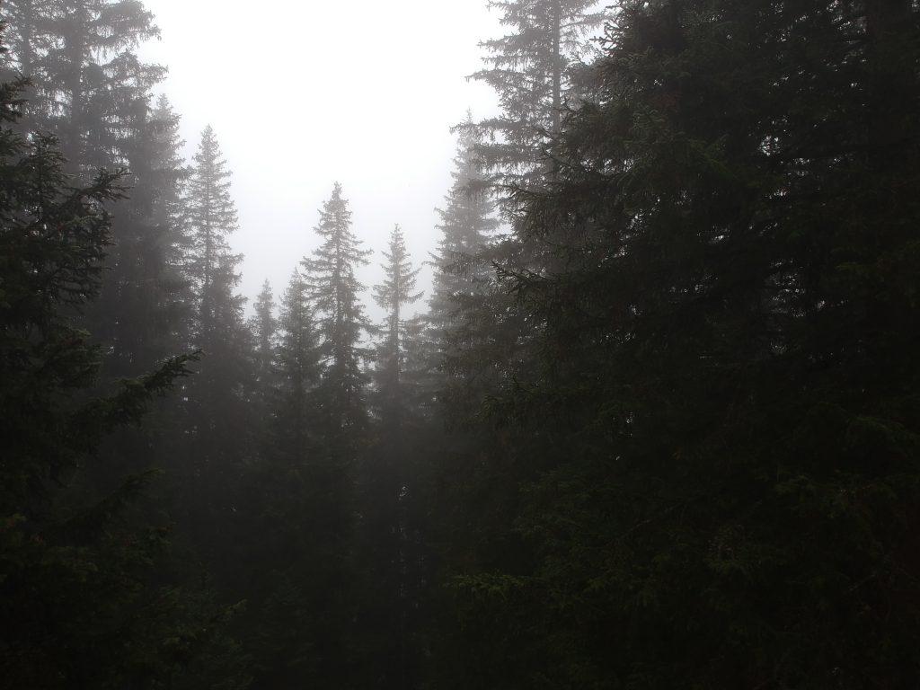 Spooky bomen in Serfaus