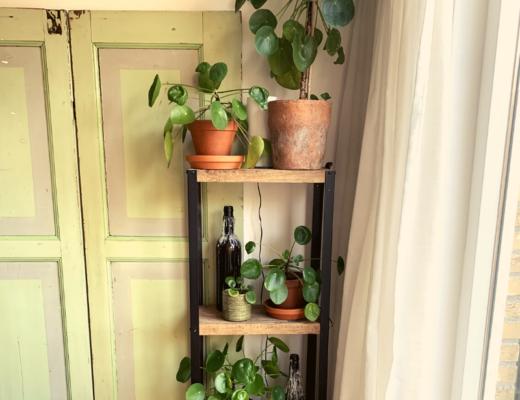 Pannenkoekenplant kast - alles over onze urban jungle